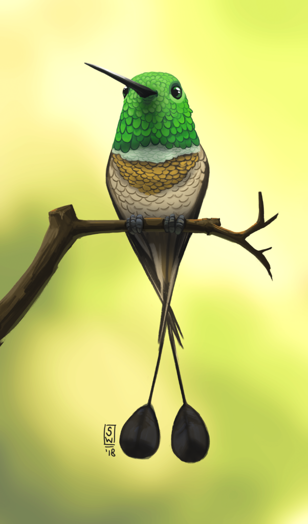 Racket-tailed Bird